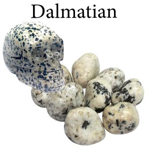 Jasper, Dalmatian