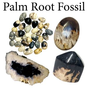 Fossil, Palm Root